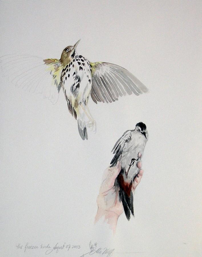 Freezer Birds